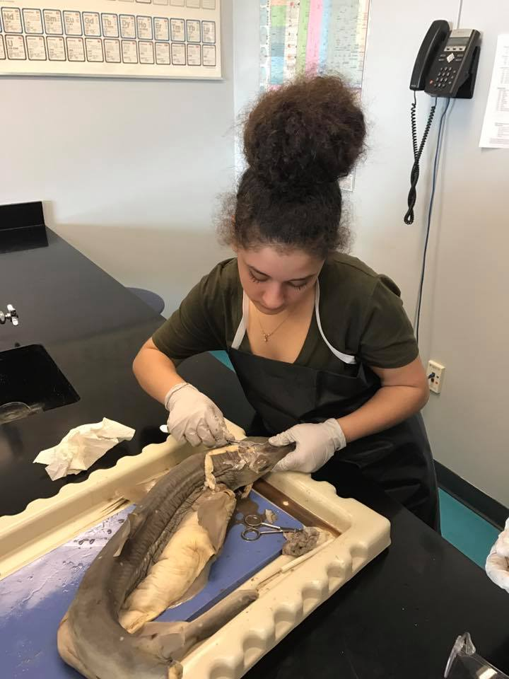 Clariden dissection